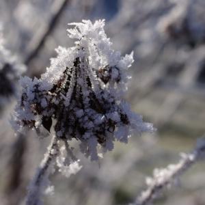 Krystalky ledu.