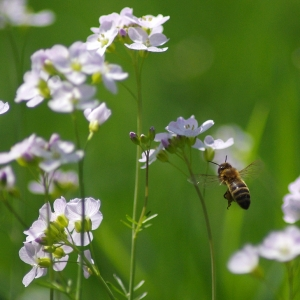 Letící včelka.