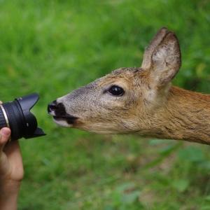 Fotíme srnky!
